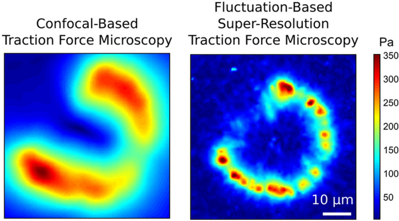 NEW! Super-resolution Traction Force Microscopy for measuring mechanical forces in living cells